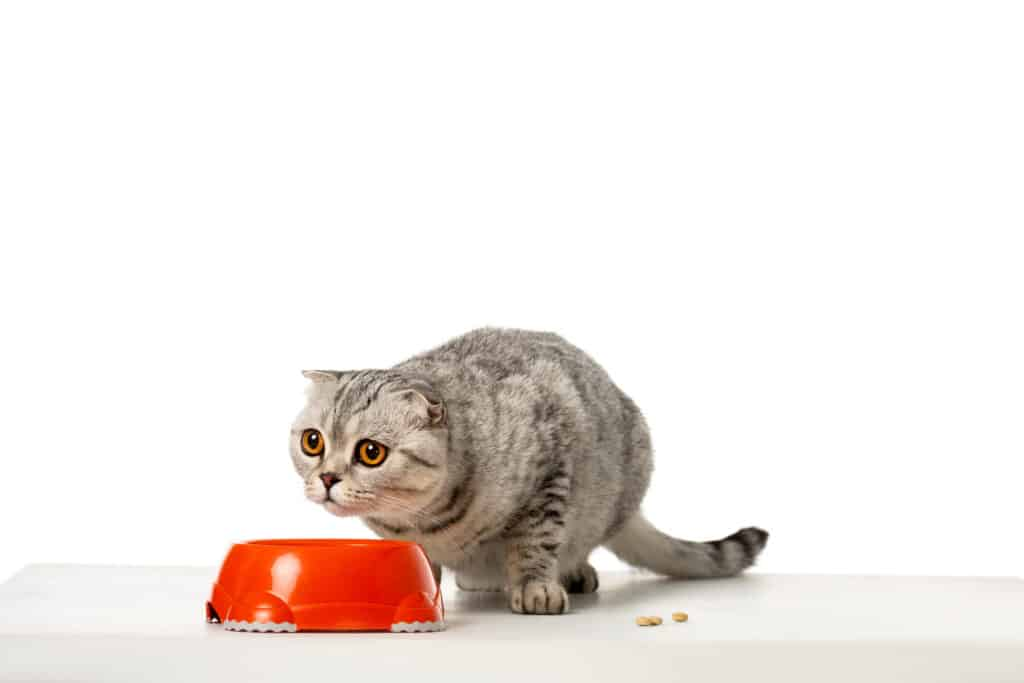 dry and wet cat food for sensitive stomach
