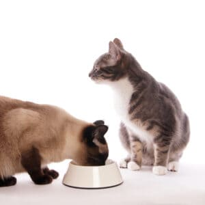 best cat food for urinary crystals