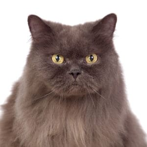 best cat food for older cats