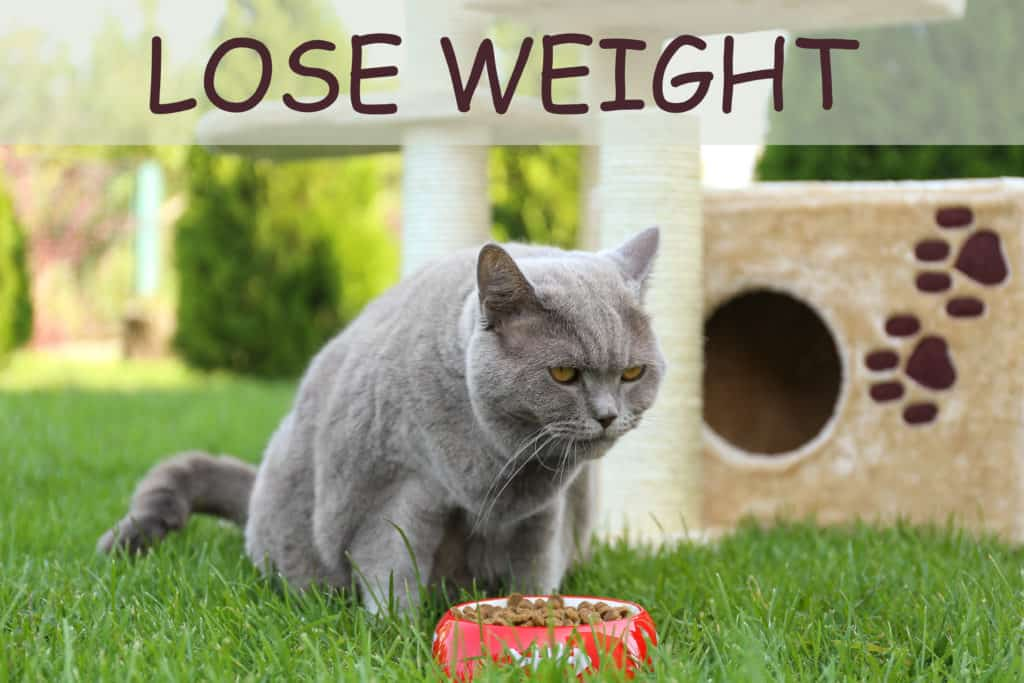 cat food for weight loss